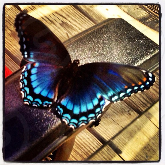 black and blue butterfly photo
