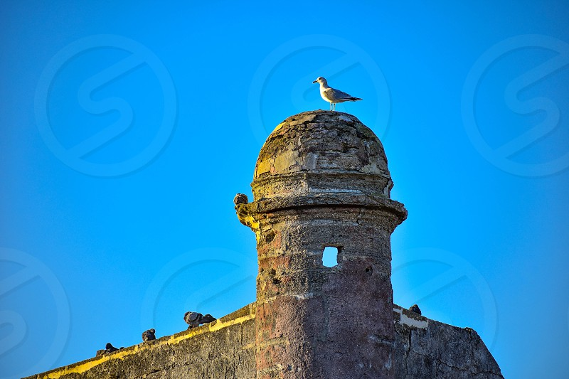 St. Augustine Florida. January 26  2019. Top view of Castillo de San Marcos and seagull on lightblue background in Florida's Historic Coast . photo