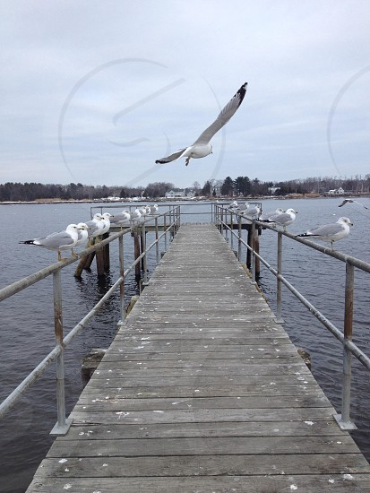 white seagulls on dock under gray cloudy skies during daytime photo