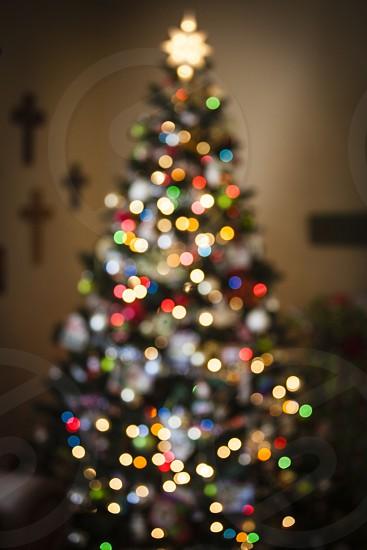 christmas lights tree blur celebrate holiday celebration  photo