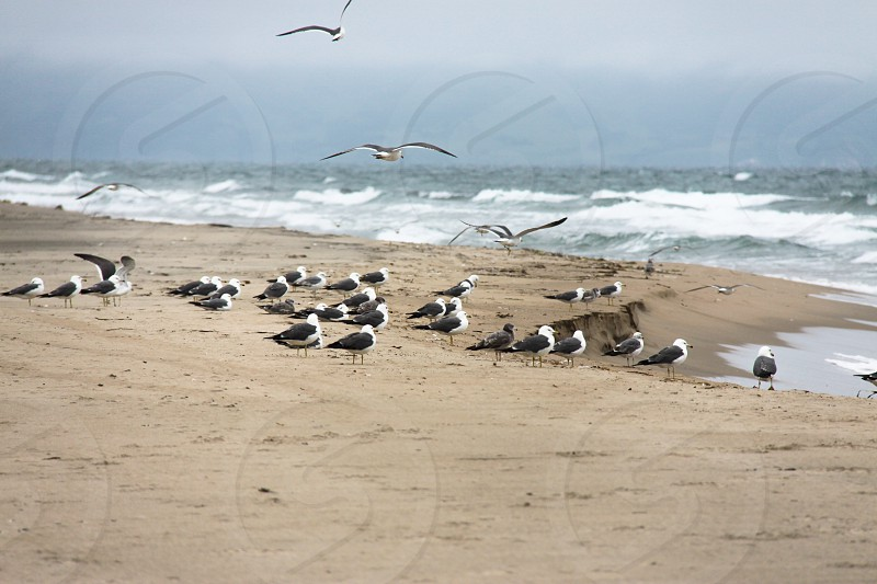 gulls birds shore beach coast sea sand wings background flight nature photo