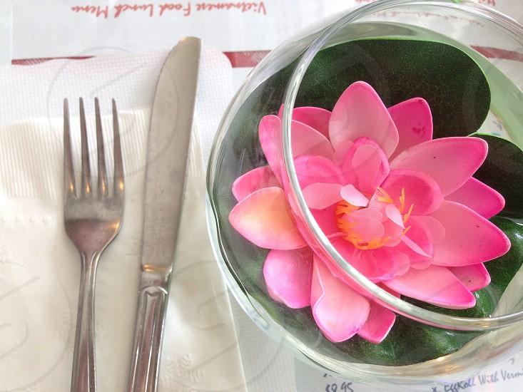 lotusflowerspinksingle photo