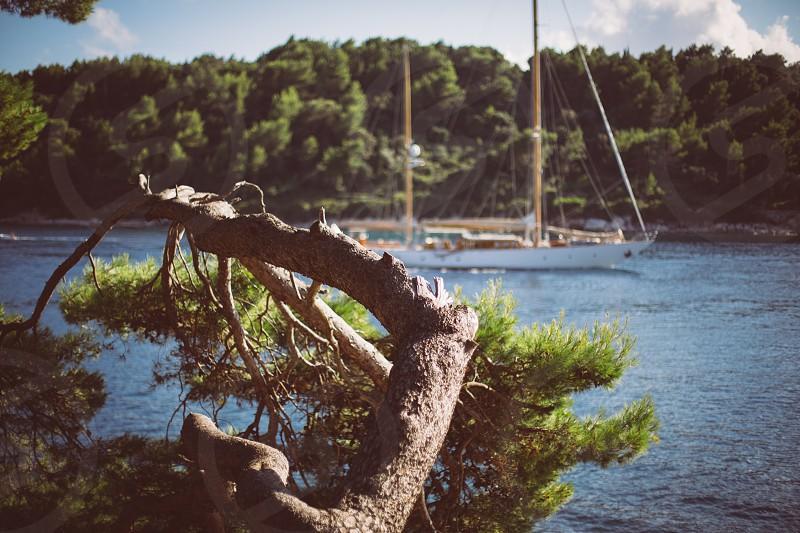 travel sail boat sea pine photo