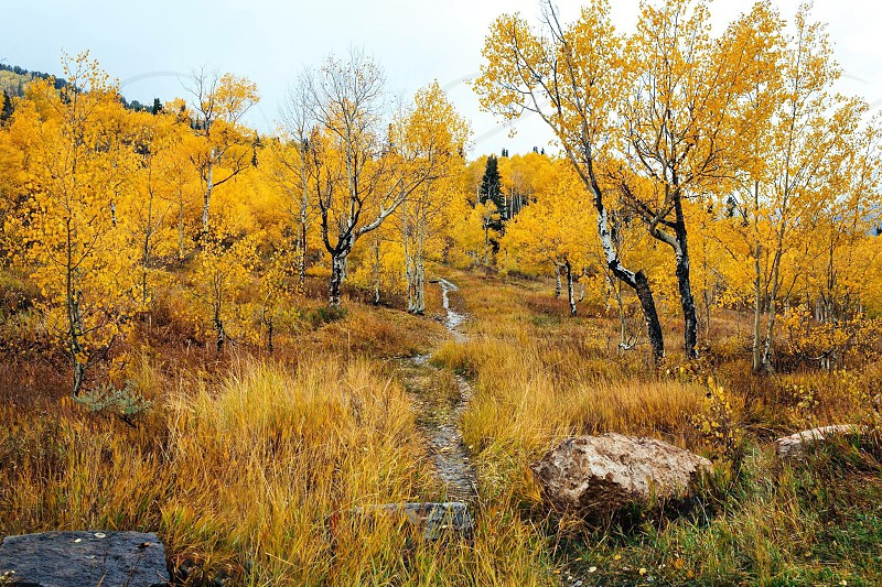 yellow leaf trees on grass land on down hill photo
