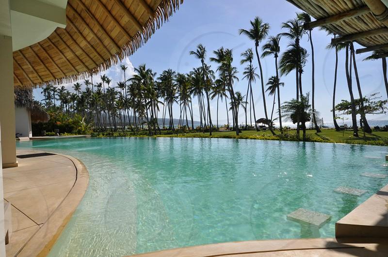 swimming pool beside coconut trees photo