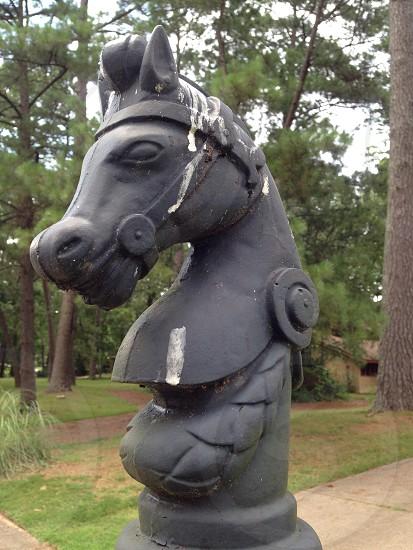 Knight horse bust chess ornament sculpture statue head photo