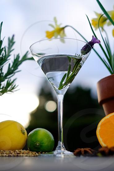 Gin botanicals lavender fruit summer spring lemon orange lime martini glass cocktails alcohol sun dial drinks refreshing  photo