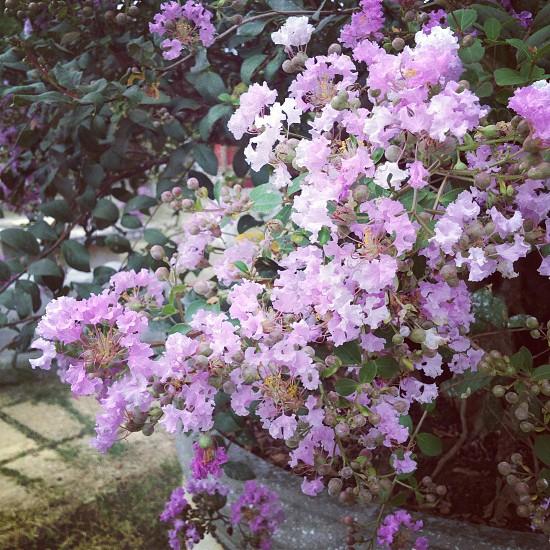 purple flower close up view photo