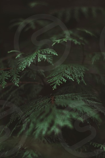 Forest Washington tree wet rainforest evergreen rain dark photo