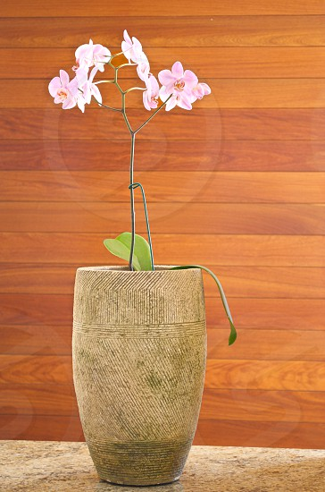 potted white and pink orchids photo