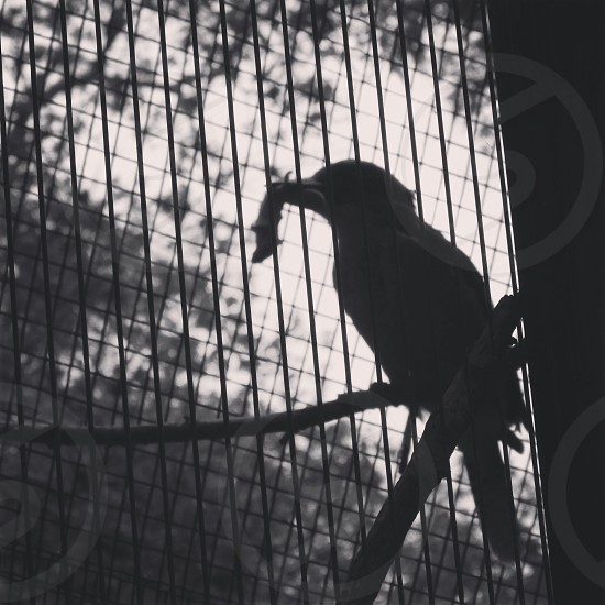 silhouette of black bird photo
