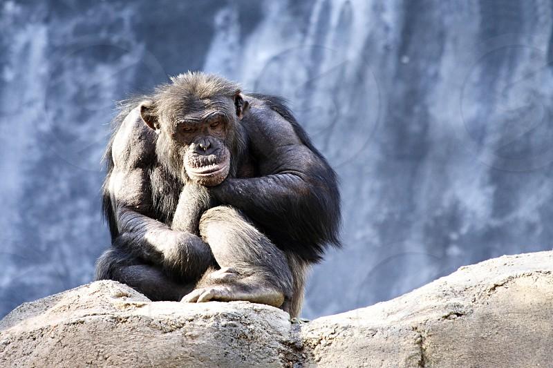 black monkey on rock photo