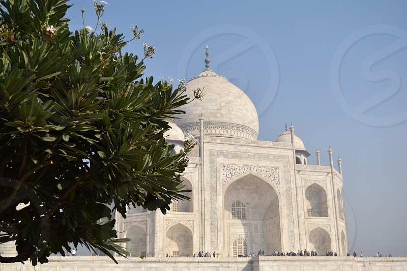 Tree and Taj photo
