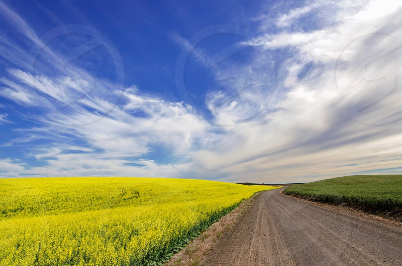 Canola field Kansas Flint Hills landscape travel photo
