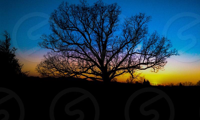 tree's silhouette through sunset photo