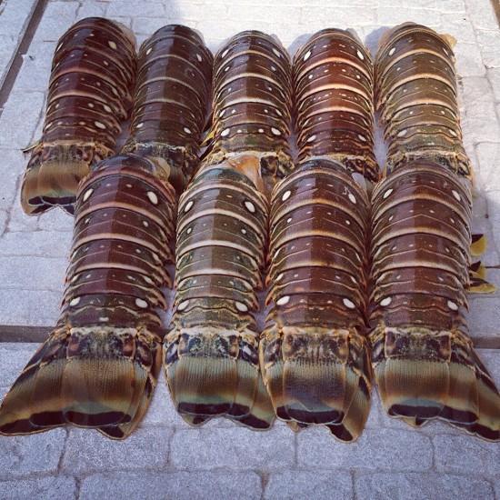 Lobster tails key west Florida big pine key  photo