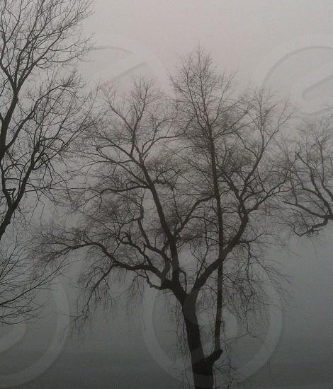 Foggy Morning on Lake photo