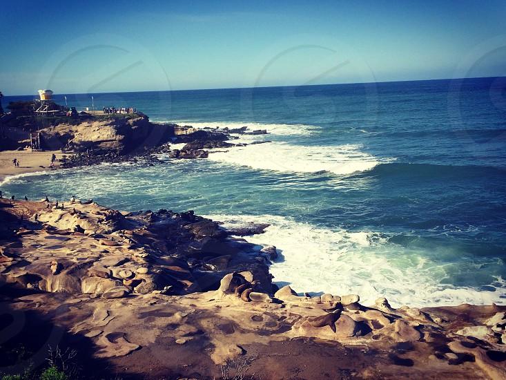 beach waves ocean seals wildlife water tower photo