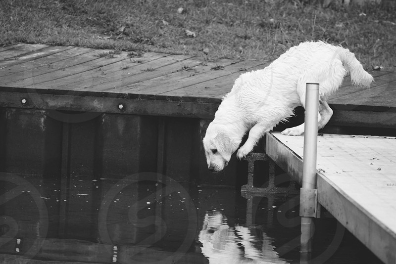 Puppy reflection  photo