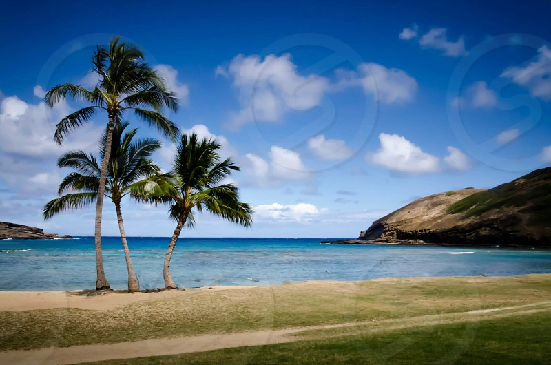 Hawaii beach palm trees sun sand travel vacation lifestyle  photo