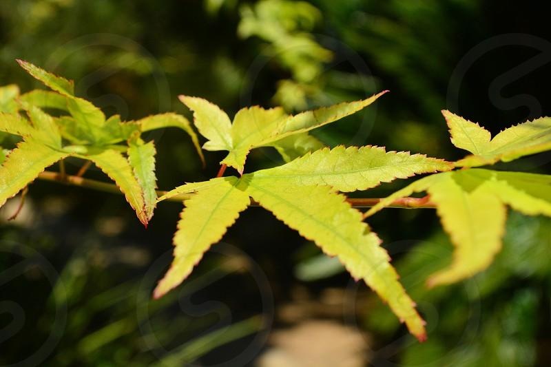 Bright greenn spring leaves on branch photo