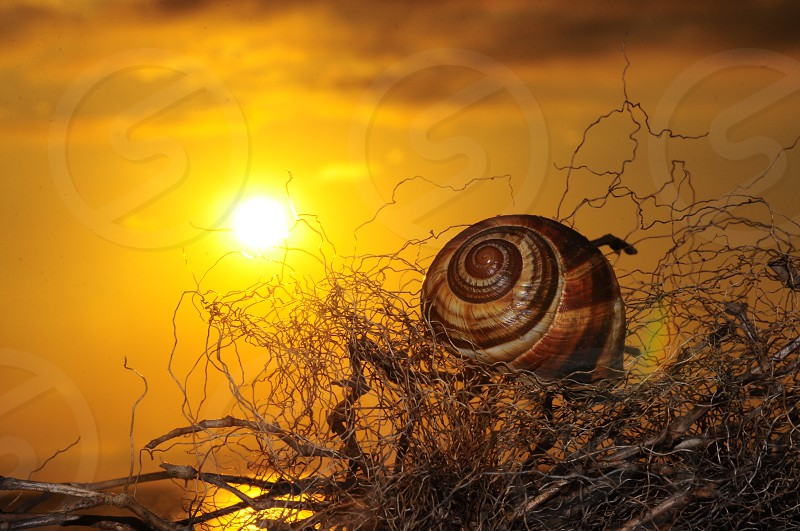 snail in branches near sunset photo