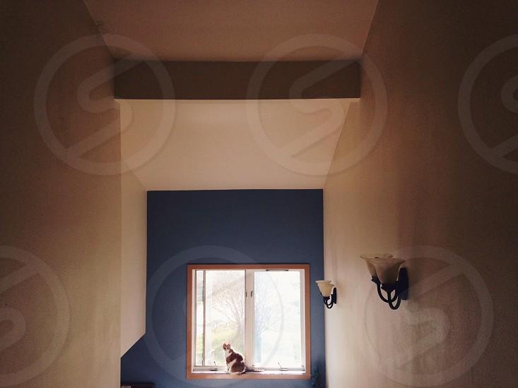 Cat sitting on a windowsill.  photo