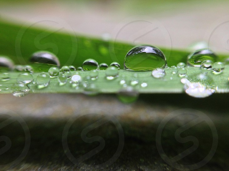water droplet photo