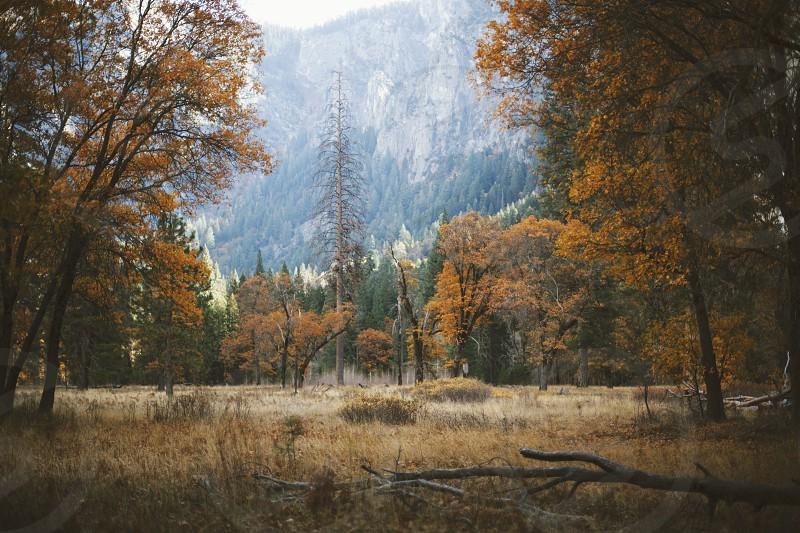 Autumn Comes to Yosemite photo