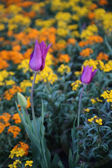 bright colored flowers in the garden photo