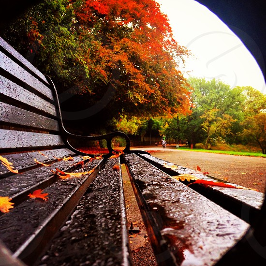 Autumn colours nature red trees rain England autumnal points of view photo