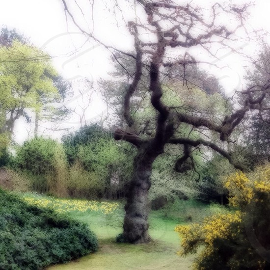The garden  photo