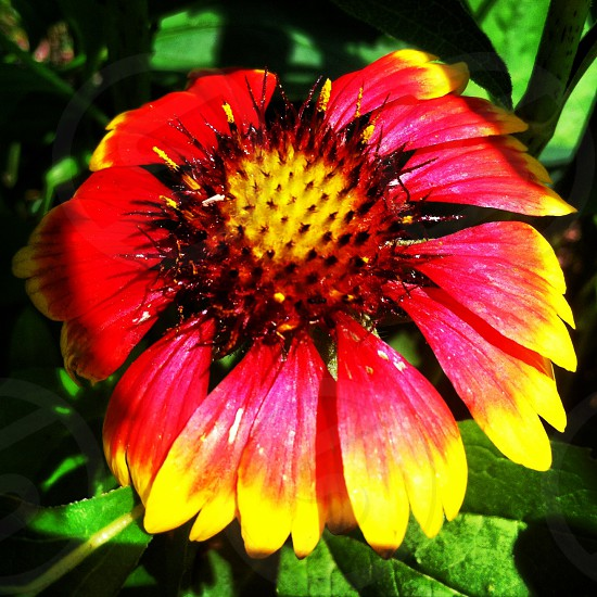 red and yellow flower photo