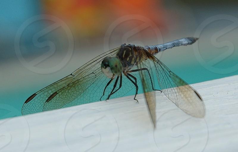 green dragonfly macro photography photo