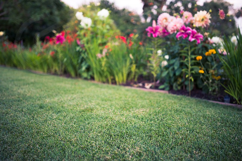 immaculate lawn grass garden manicured flowers plants vibrant photo
