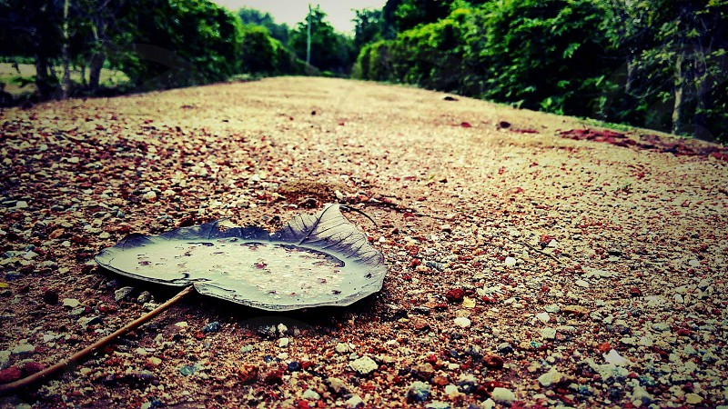 silent beauty of nature just after rain #monsoon # leaf #park #rain #sand #sky #nature #silence #life  #emotions #calm photo
