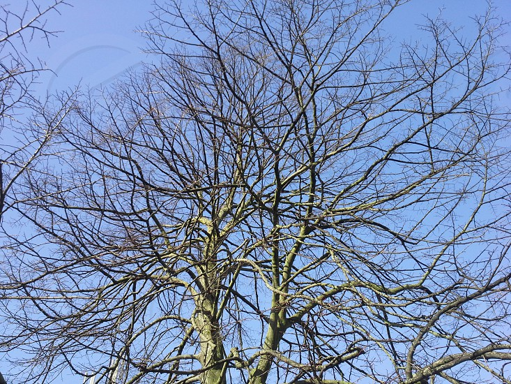 naked tree branches blue sky photo
