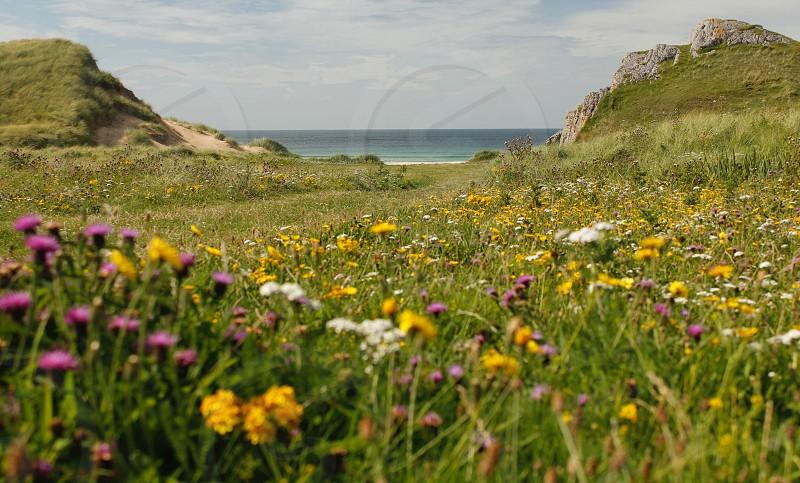 Wild flowers sea sand photo