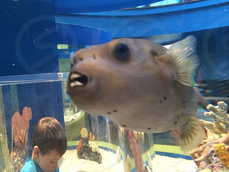 Say cheese!  This is a fish in the aquariums at Gatlinburg Tennessee photo