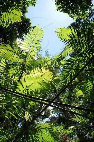 green forest plant photo