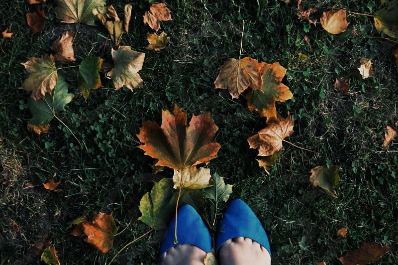 brown leaves on woman in blue pointy flats feet photo
