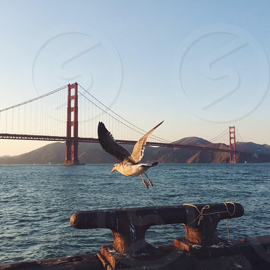 flying eagle beside the bridge view photo