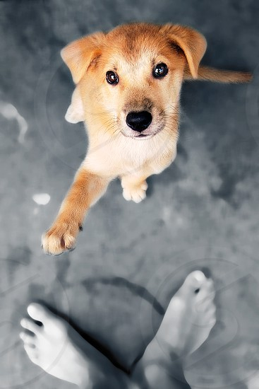 Puppy giving salute gesture. photo