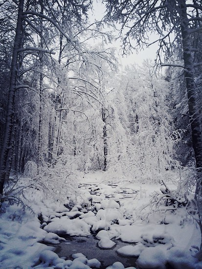 snowy river forest photograph  photo