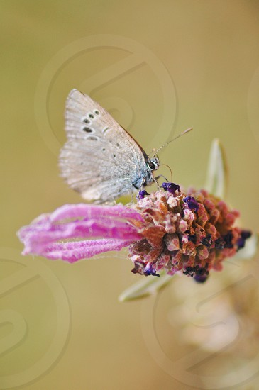 brown butterfly on flower macro photo photo