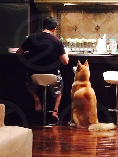 man sitting beside dog photo