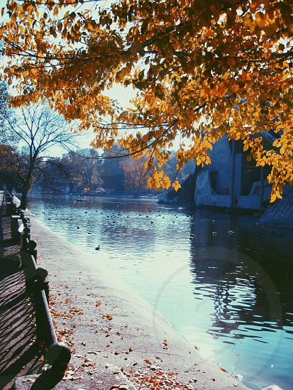 autumn water park Ukraine Dnipropetrovsk leaves tree sun rays photo
