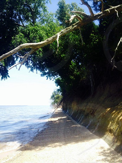 sandy beach lined with trees blue sky ocean to the left photo
