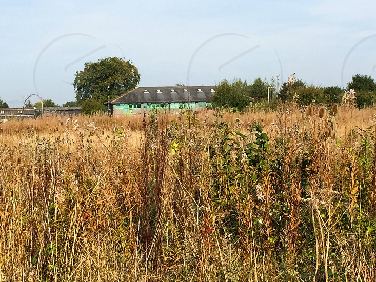 Field with random building in the background. photo