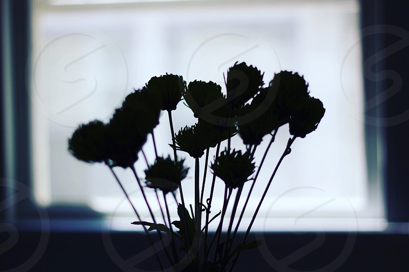 Flowers silhouette color photo